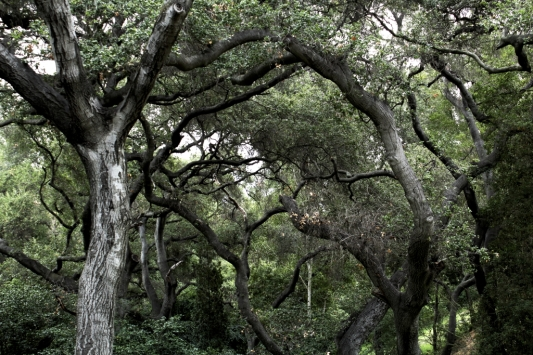 """Tree"" - not found"