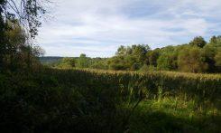 Wildwood Wetlands