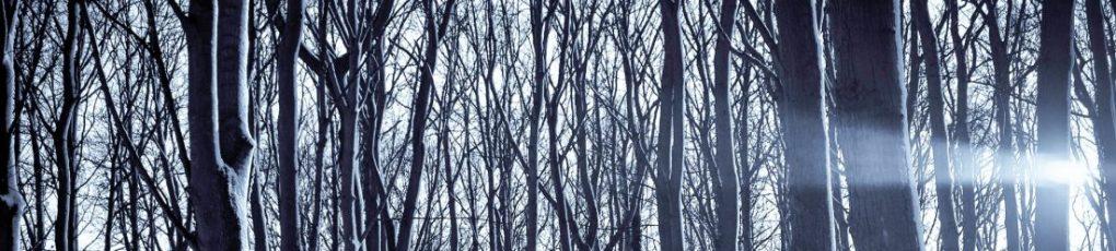 cropped-pexels_winter-forest_ykvmqwo.jpg