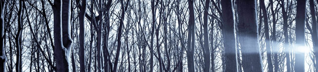 cropped-pexels_winter-forest_ykvmqwo.jpg