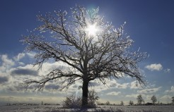 Ice Tree by Martin Cathrae